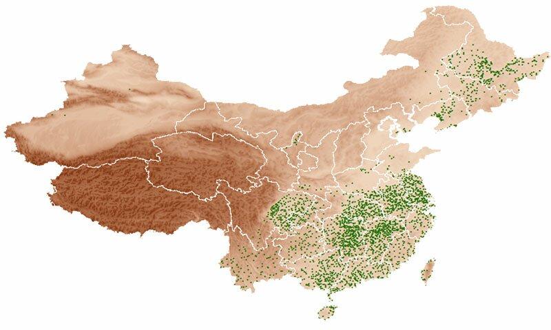 China Ricepedia