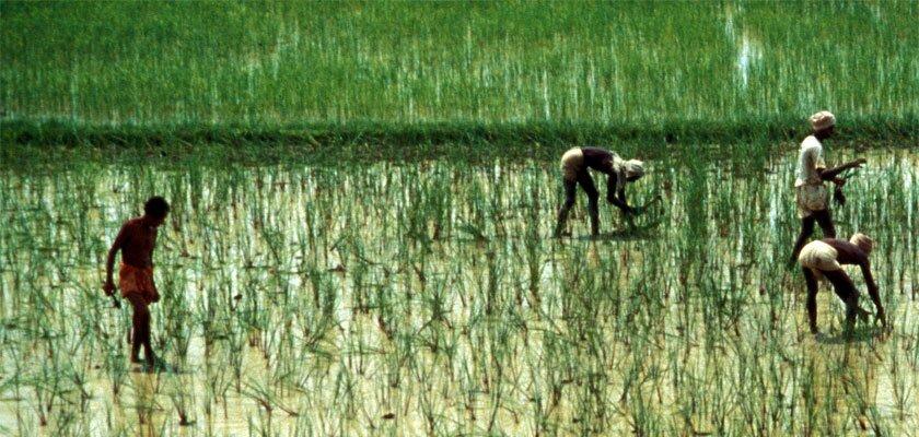 Asia Ricepedia